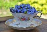 cryflowerteacup