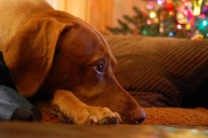 sorrowdog
