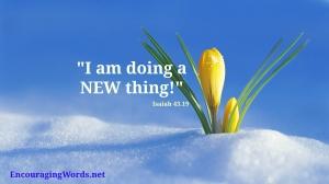 Newthingflowerinsnow