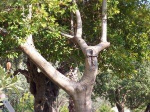 gethsemenecrosstree