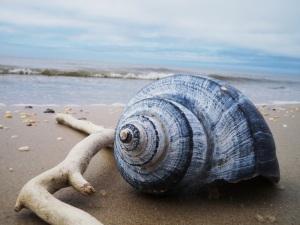 Shell & Driftwood