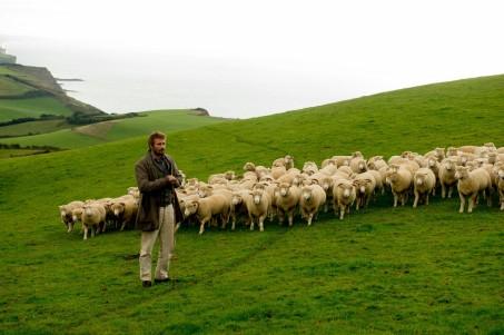sheepmovie
